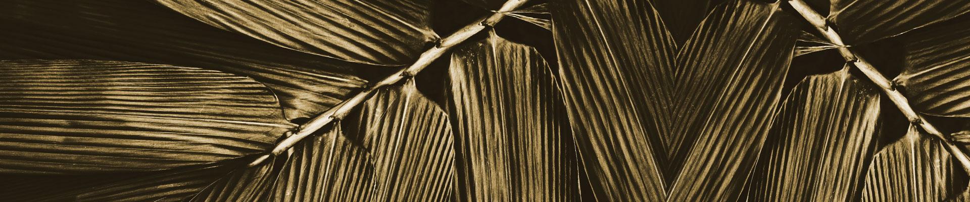 BambuBlack banner 1